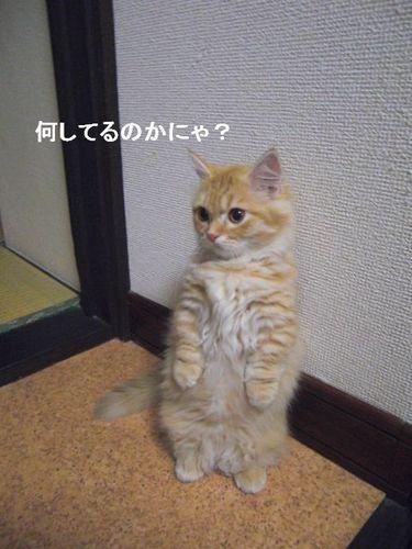 CIMG1088 つぶら.jpg