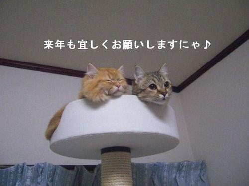 CIMG2191 ここ・つぶ.jpg