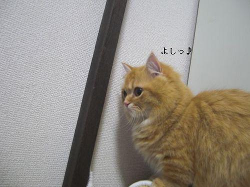 CIMG6165 つぶら.jpg