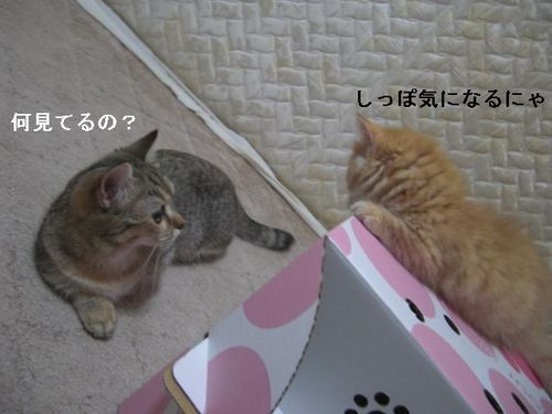 CIMG9832 ここ・つぶ.jpg