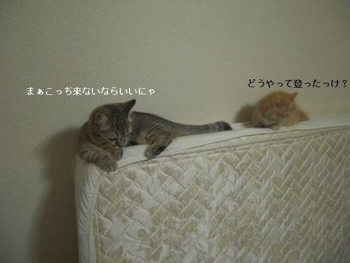 CIMG9933 ここ・つぶ.jpg