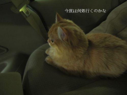 CIMG5921 つぶら.jpg